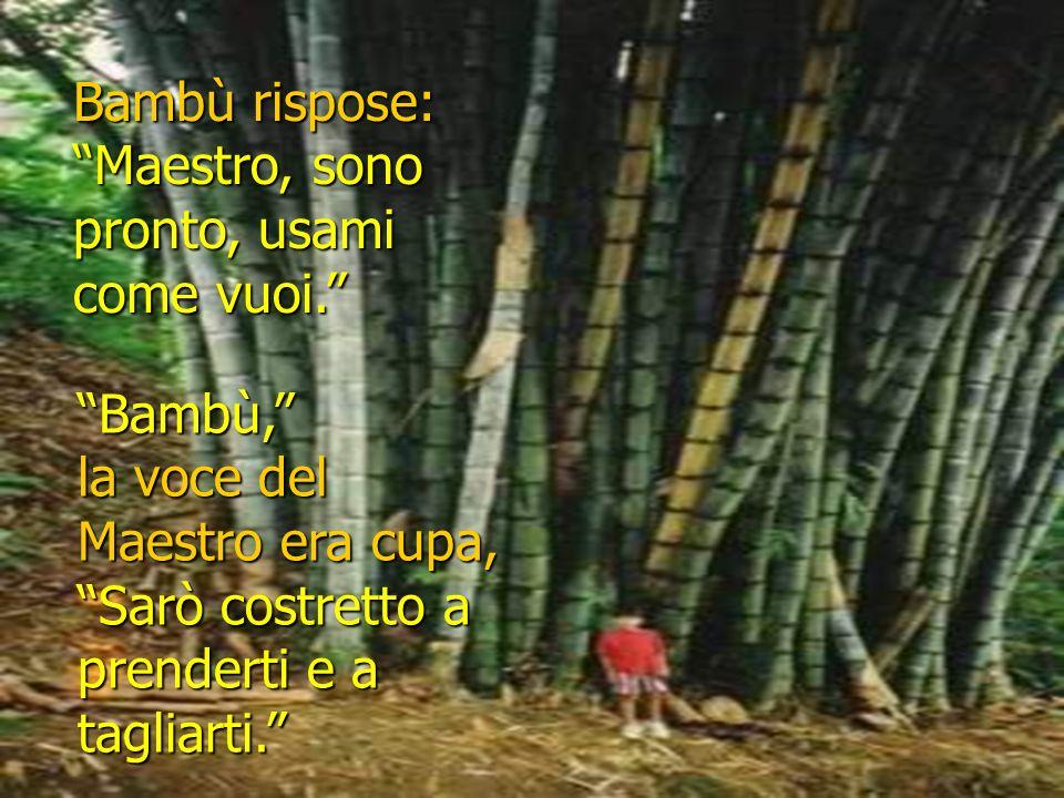 Il Maestro disse … Bambù, Bambù … Vorrei usarti.