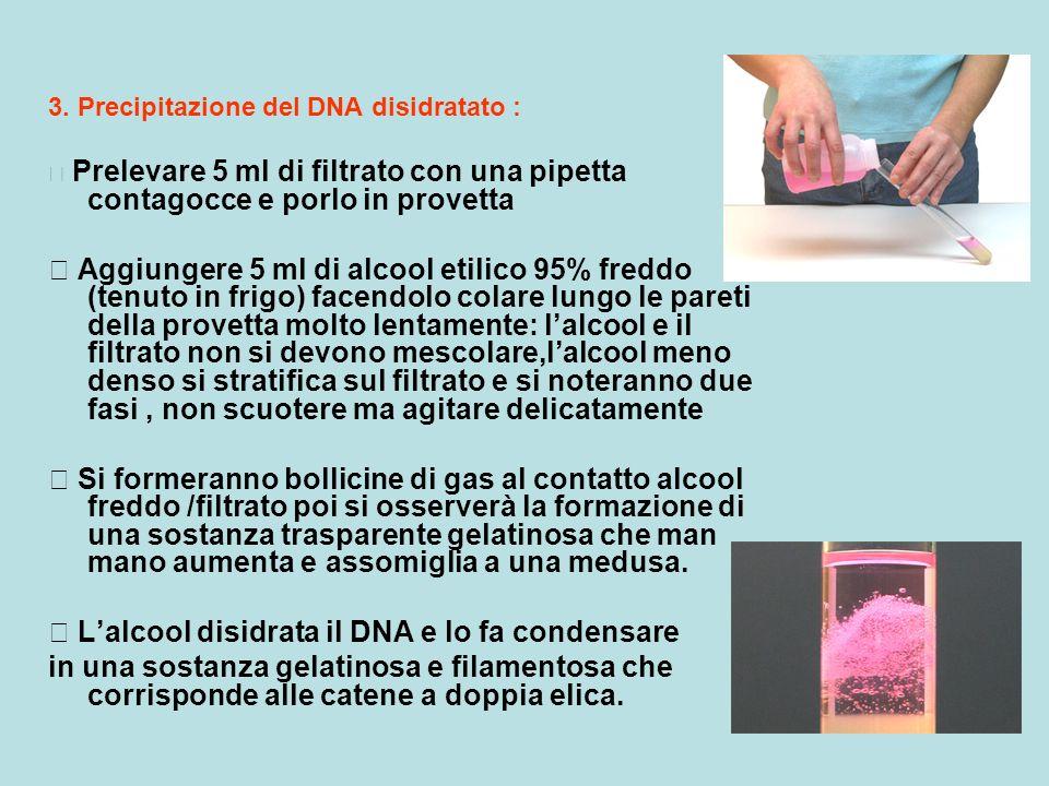 3. Precipitazione del DNA disidratato : Prelevare 5 ml di filtrato con una pipetta contagocce e porlo in provetta Aggiungere 5 ml di alcool etilico 95