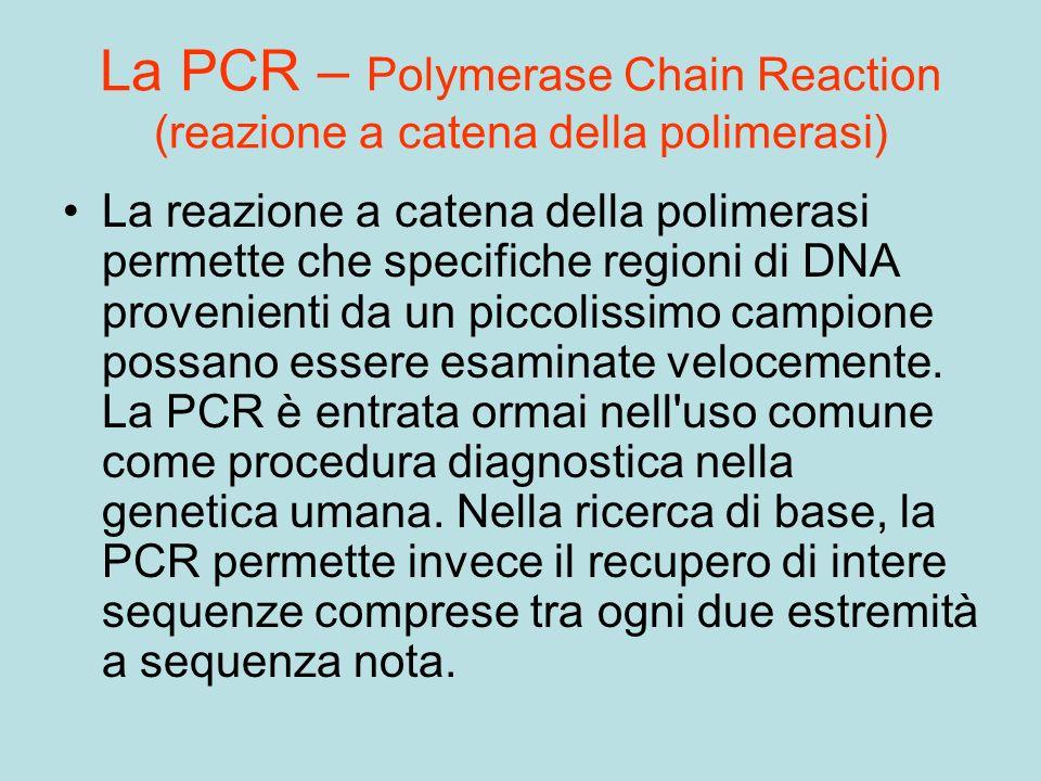 La PCR – Polymerase Chain Reaction (reazione a catena della polimerasi) La reazione a catena della polimerasi permette che specifiche regioni di DNA p