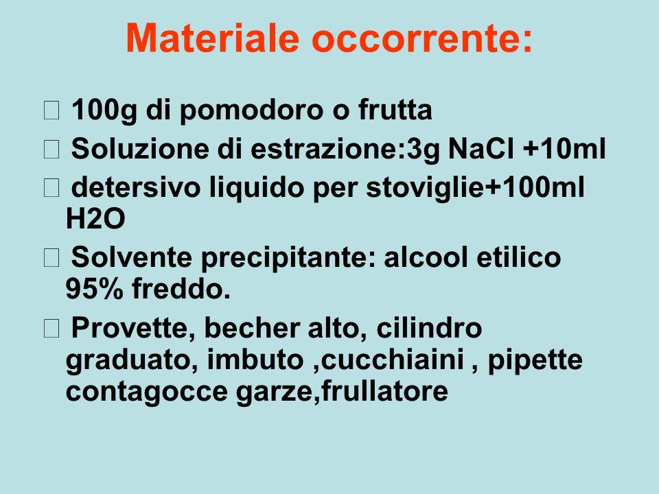Materiale occorrente: 100g di pomodoro o frutta Soluzione di estrazione:3g NaCl +10ml detersivo liquido per stoviglie+100ml H2O Solvente precipitante: