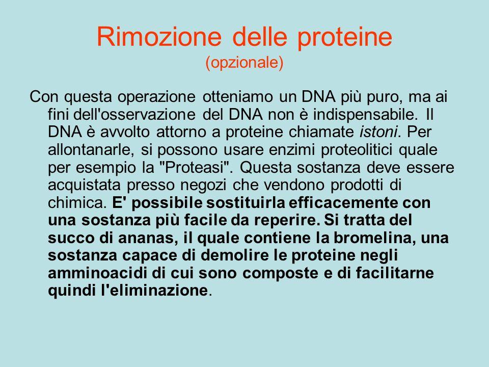 Rimozione delle proteine (opzionale) Con questa operazione otteniamo un DNA più puro, ma ai fini dell'osservazione del DNA non è indispensabile. Il DN