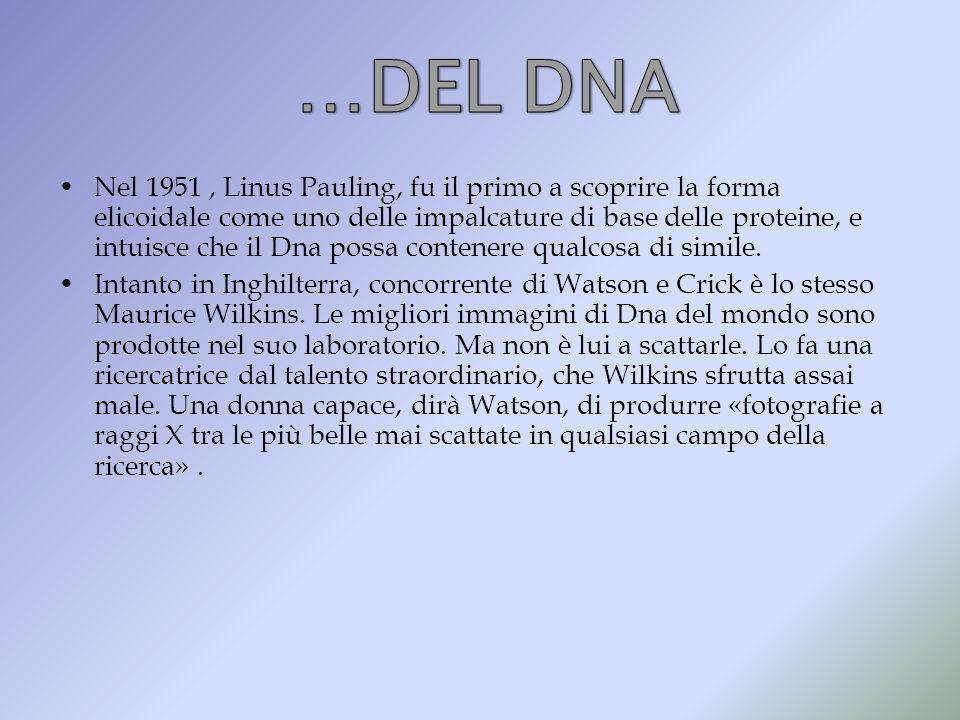 Nel 1951, Linus Pauling, fu il primo a scoprire la forma elicoidale come uno delle impalcature di base delle proteine, e intuisce che il Dna possa con
