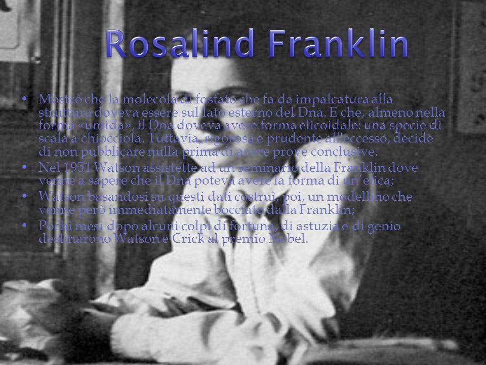 Nel frattempo Chargaff, aveva nel cassetto una copia di «photograph 51», la più recente e perfetta delle immagini di Rosalind Franklin, sviluppata da un campione purissimo di Dna.