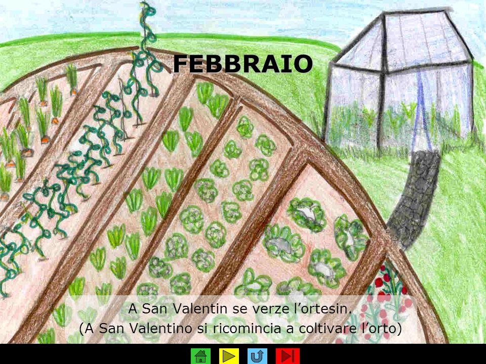 FEBBRAIO A San Valentin se verze lortesin. (A San Valentino si ricomincia a coltivare lorto)