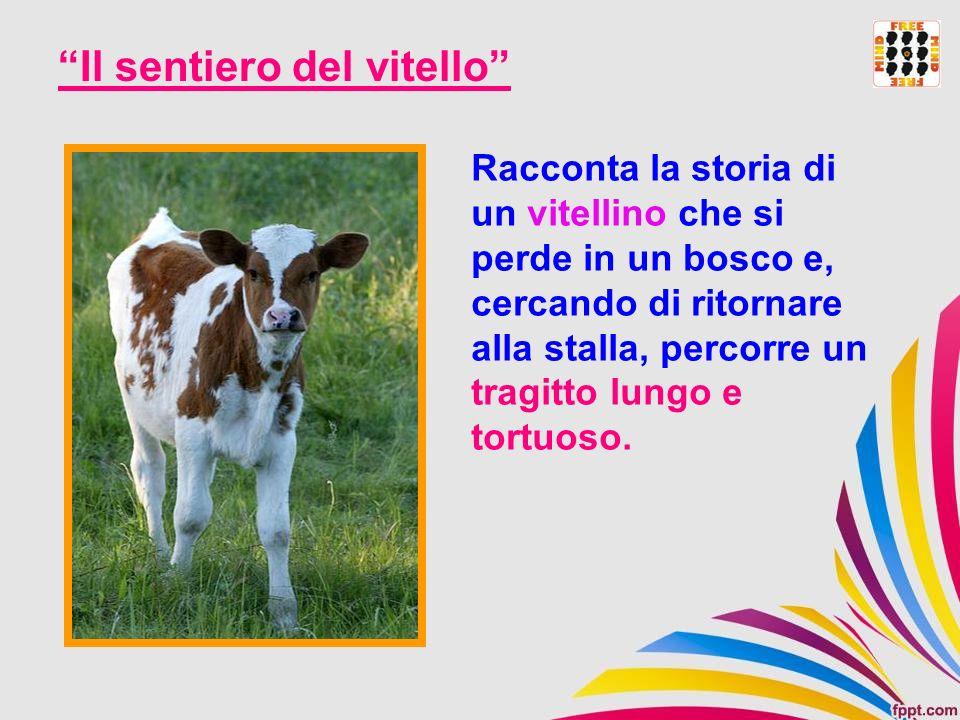 Il sentiero del vitello Racconta la storia di un vitellino che si perde in un bosco e, cercando di ritornare alla stalla, percorre un tragitto lungo e