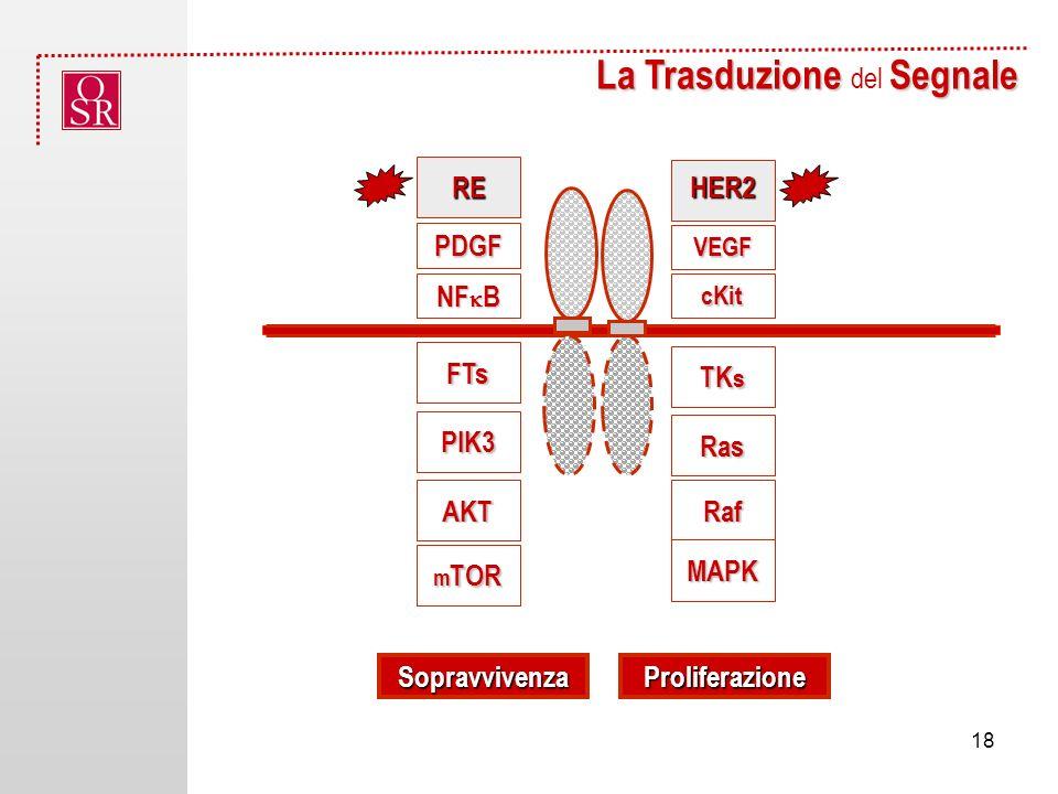 La Trasduzione Segnale La Trasduzione del Segnale SopravvivenzaProliferazione FTs PIK3 Ras AKTRaf m TOR MAPK HER2 NF B TK s cKit RE VEGF PDGF 18