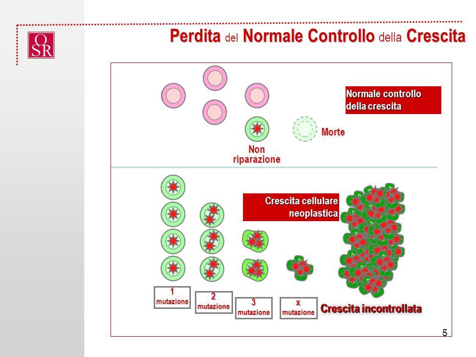 Perdita Normale Controllo Crescita Perdita del Normale Controllo della Crescita Crescita cellulare neoplastica 1 mutazione Crescita incontrollata Morte Non riparazione Normale controllo della crescita 2 mutazione 3 mutazione x mutazione 5