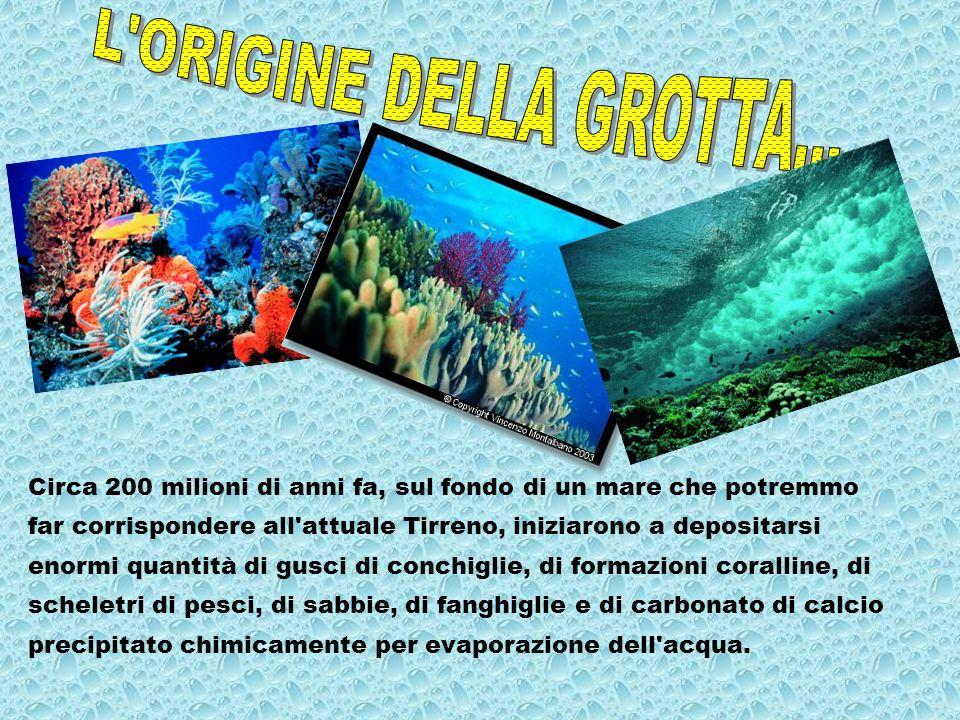 Circa 200 milioni di anni fa, sul fondo di un mare che potremmo far corrispondere all'attuale Tirreno, iniziarono a depositarsi enormi quantità di gus