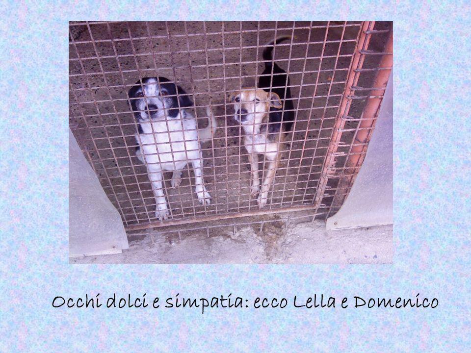 Occhi dolci e simpatia: ecco Lella e Domenico