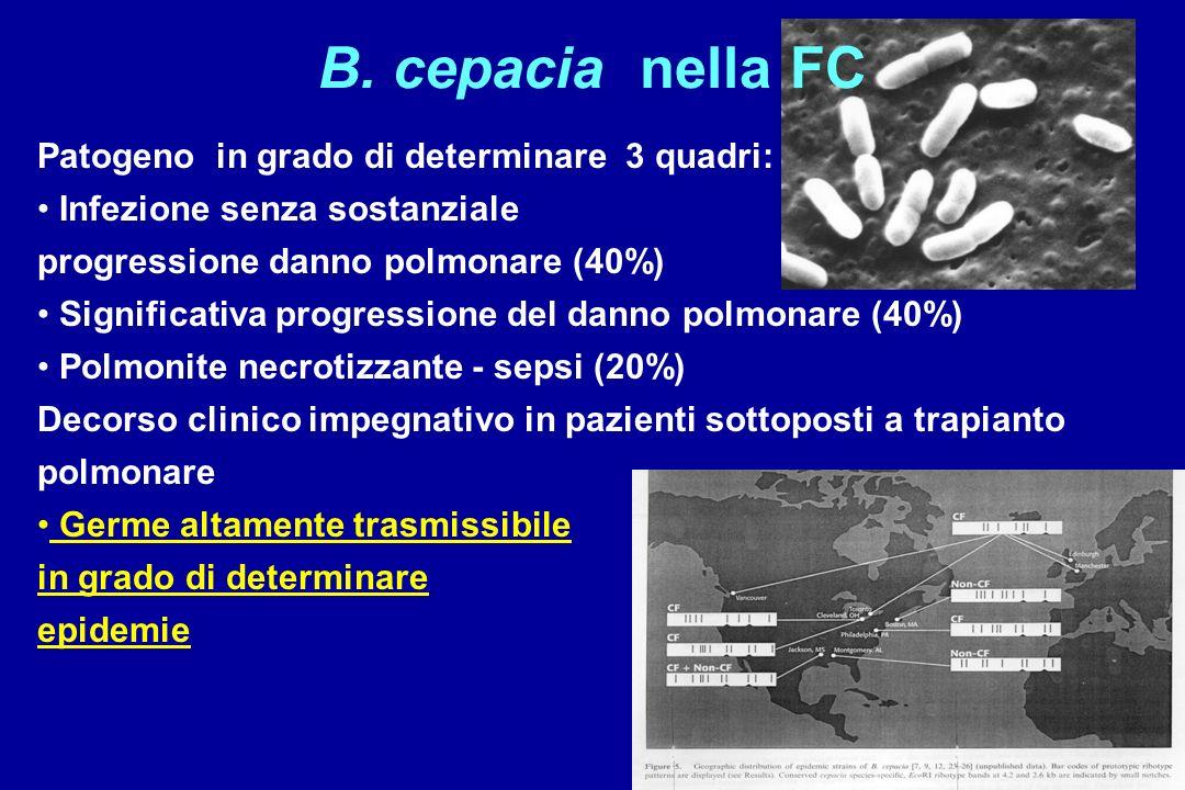 B. cepacia nella FC Patogeno in grado di determinare 3 quadri: Infezione senza sostanziale progressione danno polmonare (40%) Significativa progressio