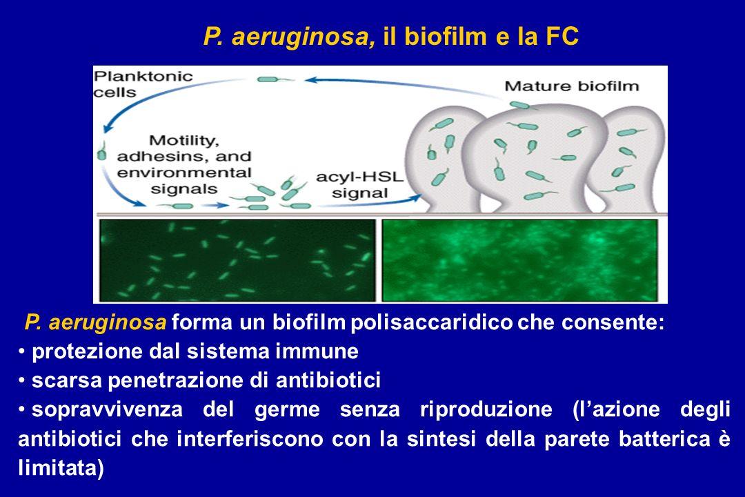 P. aeruginosa, il biofilm e la FC P. aeruginosa forma un biofilm polisaccaridico che consente: protezione dal sistema immune scarsa penetrazione di an