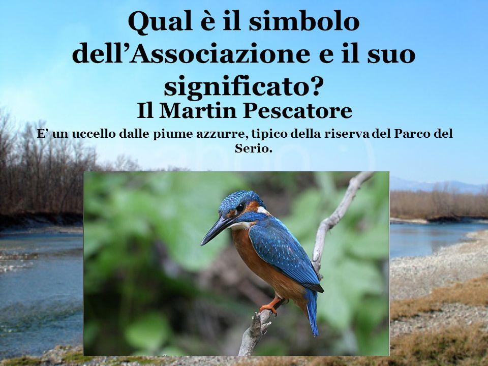 Qual è il simbolo dellAssociazione e il suo significato? Il Martin Pescatore E un uccello dalle piume azzurre, tipico della riserva del Parco del Seri
