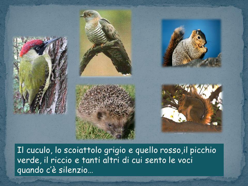 Il cuculo, lo scoiattolo grigio e quello rosso,il picchio verde, il riccio e tanti altri di cui sento le voci quando cè silenzio…