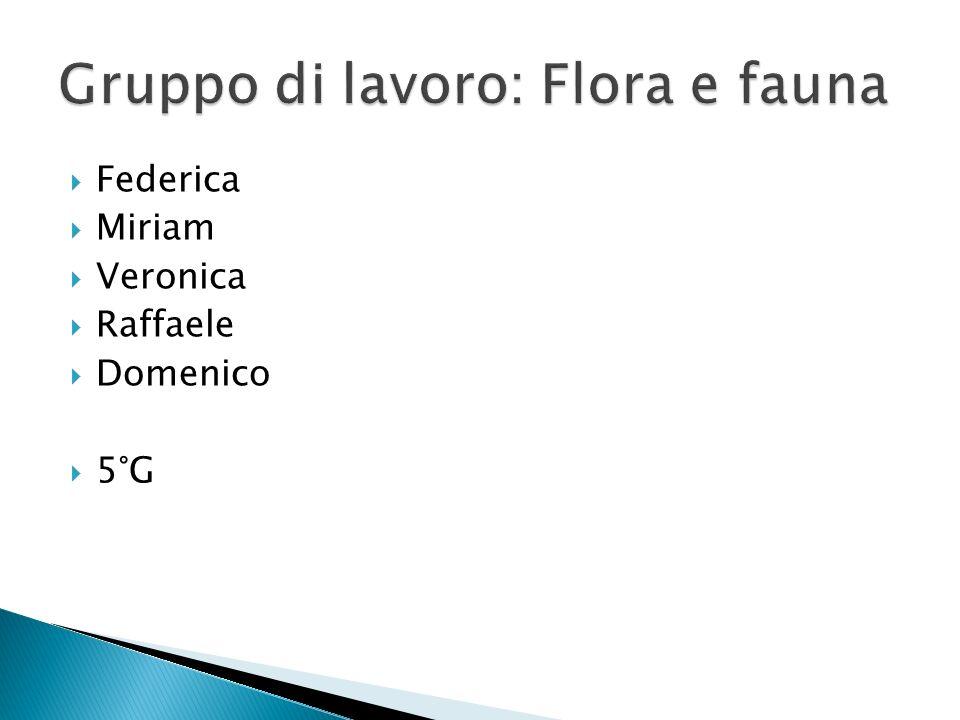 Federica Miriam Veronica Raffaele Domenico 5°G