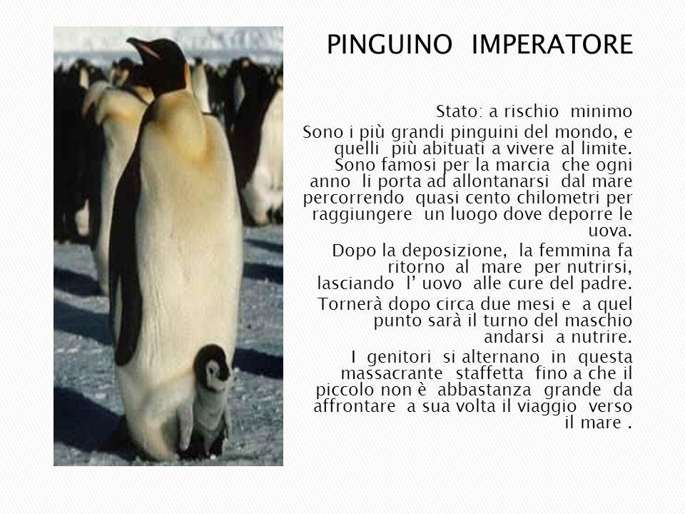 PINGUINO IMPERATORE Stato: a rischio minimo Sono i più grandi pinguini del mondo, e quelli più abituati a vivere al limite. Sono famosi per la marcia