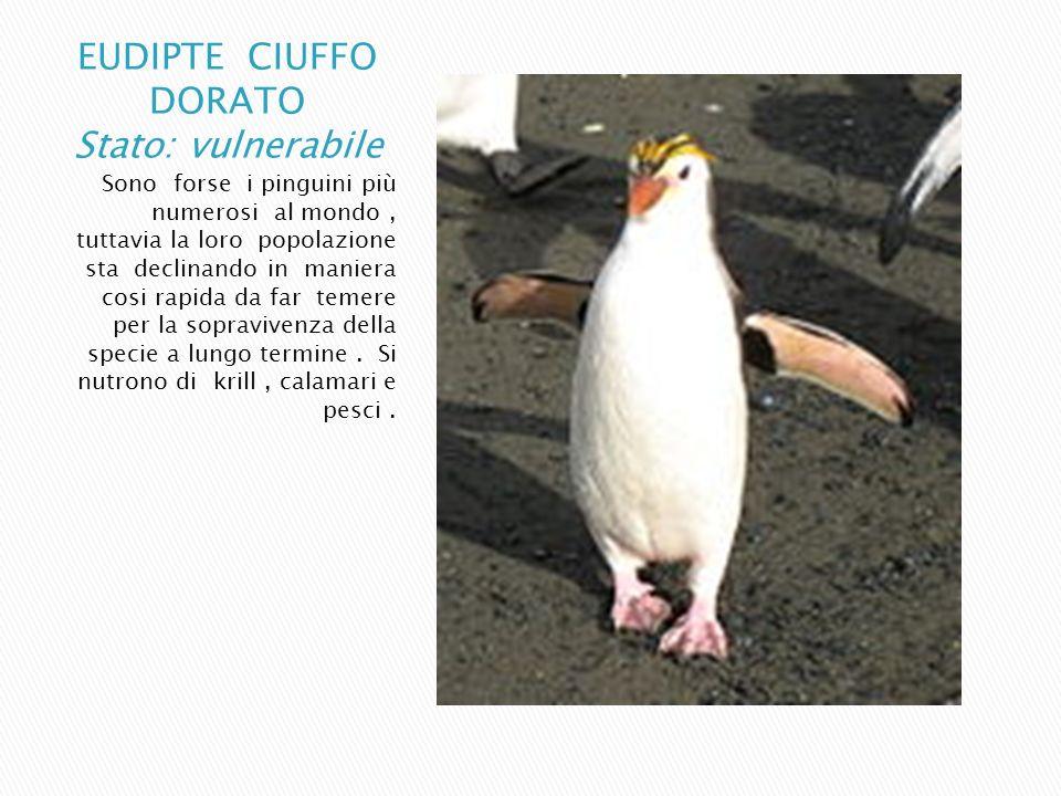 Sono forse i pinguini più numerosi al mondo, tuttavia la loro popolazione sta declinando in maniera cosi rapida da far temere per la sopravivenza dell