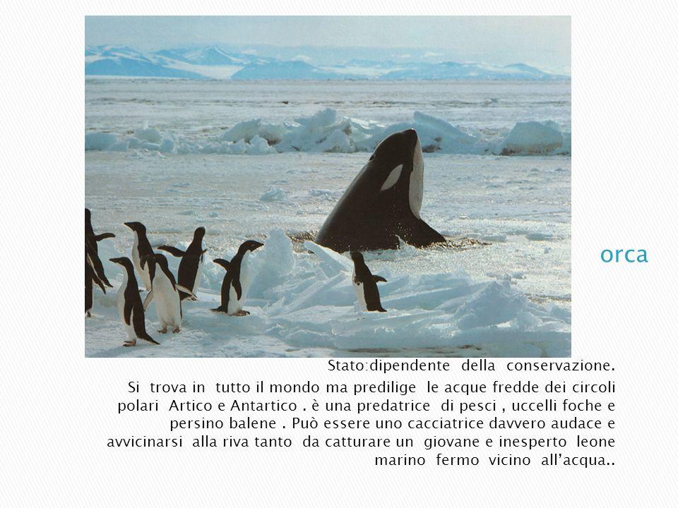 Stato:dipendente della conservazione. Si trova in tutto il mondo ma predilige le acque fredde dei circoli polari Artico e Antartico. è una predatrice