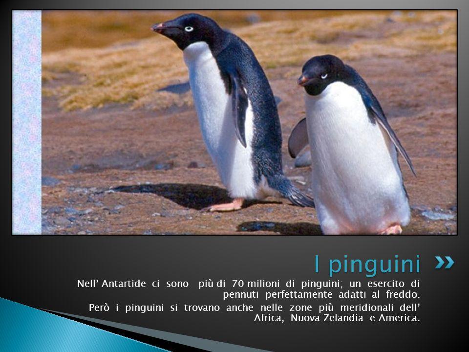 Nell Antartide ci sono più di 70 milioni di pinguini; un esercito di pennuti perfettamente adatti al freddo. Però i pinguini si trovano anche nelle zo