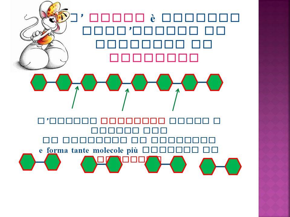 L amido è formato dall unione di molecole di glucosio L enzima ptialina rompe i legami tra le molecole di glucosio e forma tante molecole più piccole