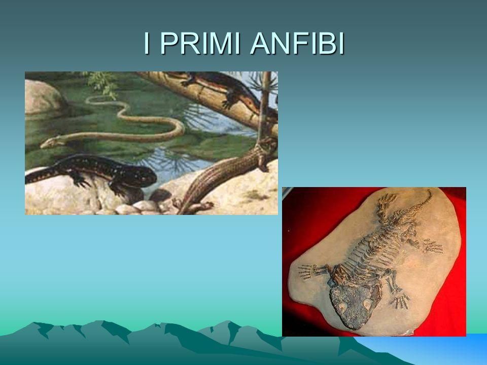 I PRIMI ANFIBI