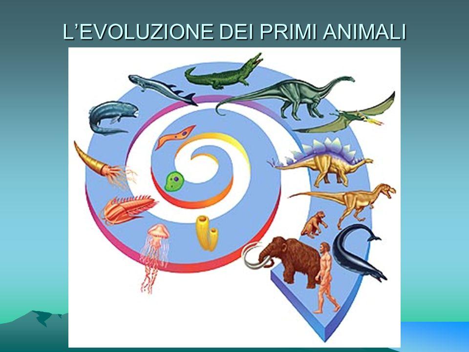 LEVOLUZIONE DEI PRIMI ANIMALI