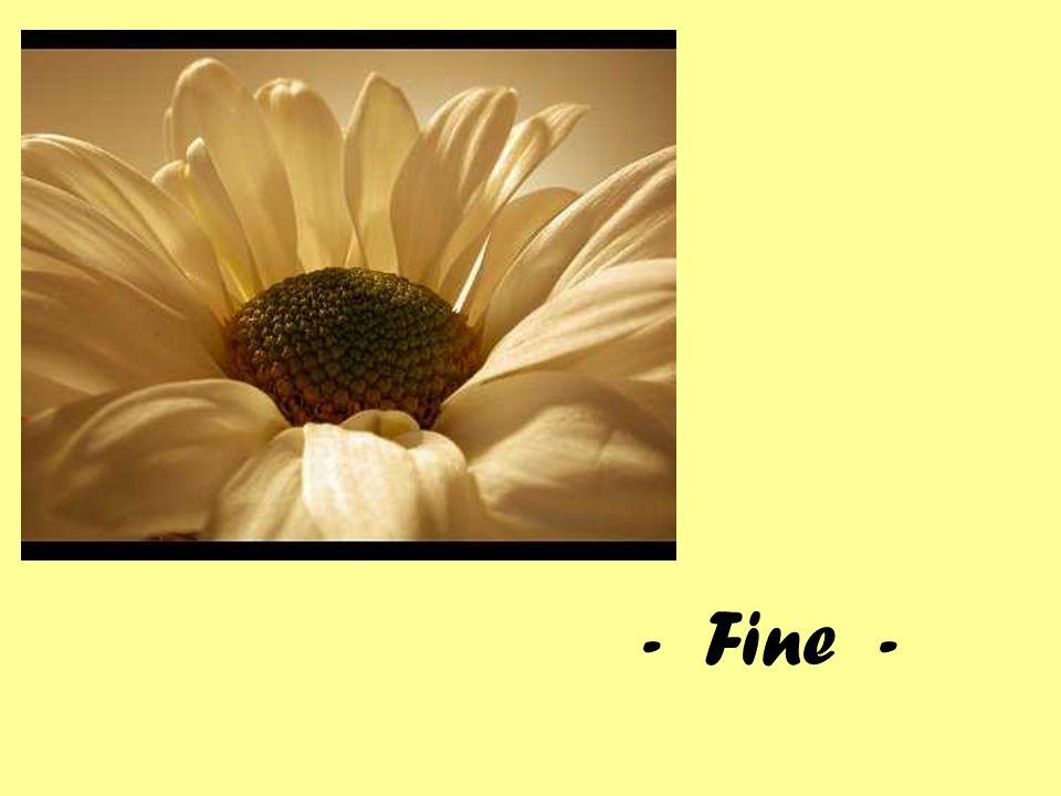 - Fine -