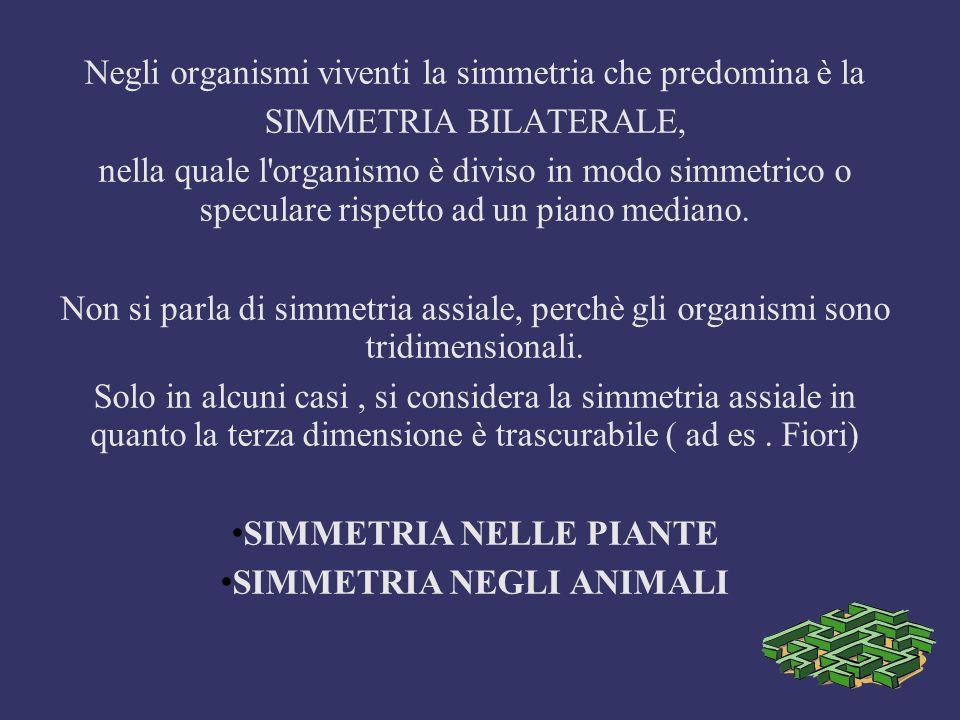 Negli organismi viventi la simmetria che predomina è la SIMMETRIA BILATERALE, nella quale l'organismo è diviso in modo simmetrico o speculare rispetto