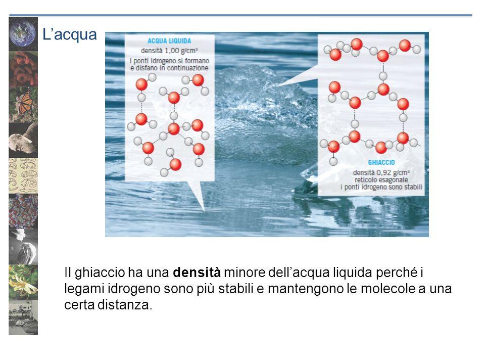 Lacqua Il ghiaccio ha una densità minore dellacqua liquida perché i legami idrogeno sono più stabili e mantengono le molecole a una certa distanza.