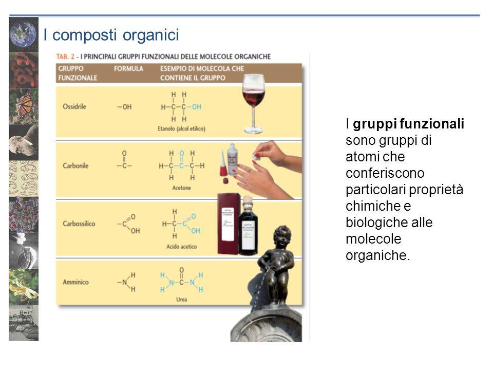 I composti organici I gruppi funzionali sono gruppi di atomi che conferiscono particolari proprietà chimiche e biologiche alle molecole organiche.