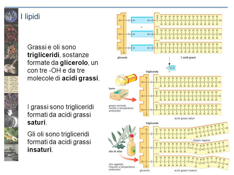 I lipidi Grassi e oli sono trigliceridi, sostanze formate da glicerolo, un con tre -OH e da tre molecole di acidi grassi. I grassi sono trigliceridi f