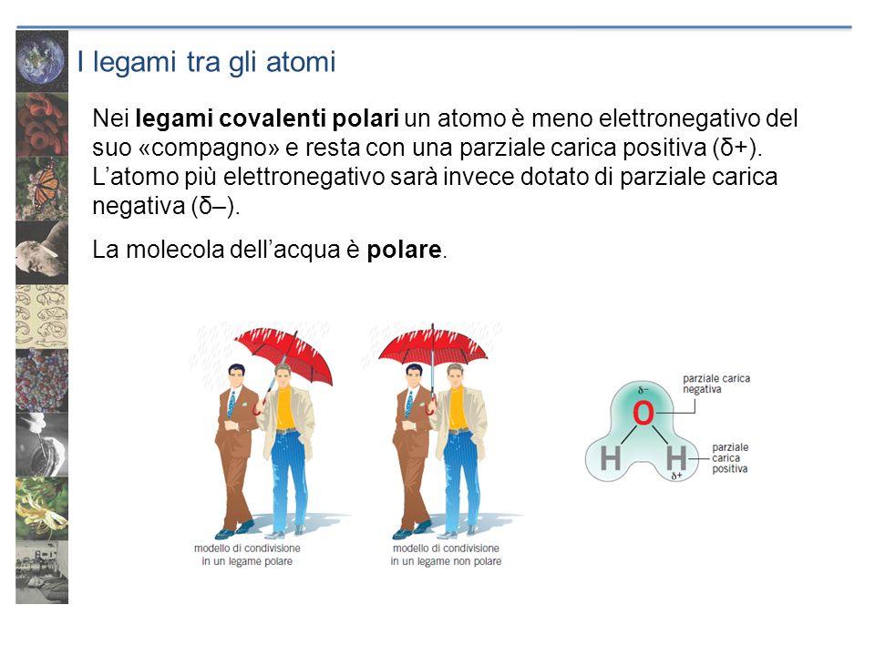 I legami tra gli atomi Nei legami covalenti polari un atomo è meno elettronegativo del suo «compagno» e resta con una parziale carica positiva (δ+). L