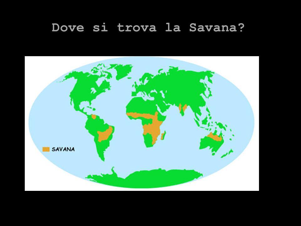 Dove si trova la Savana?