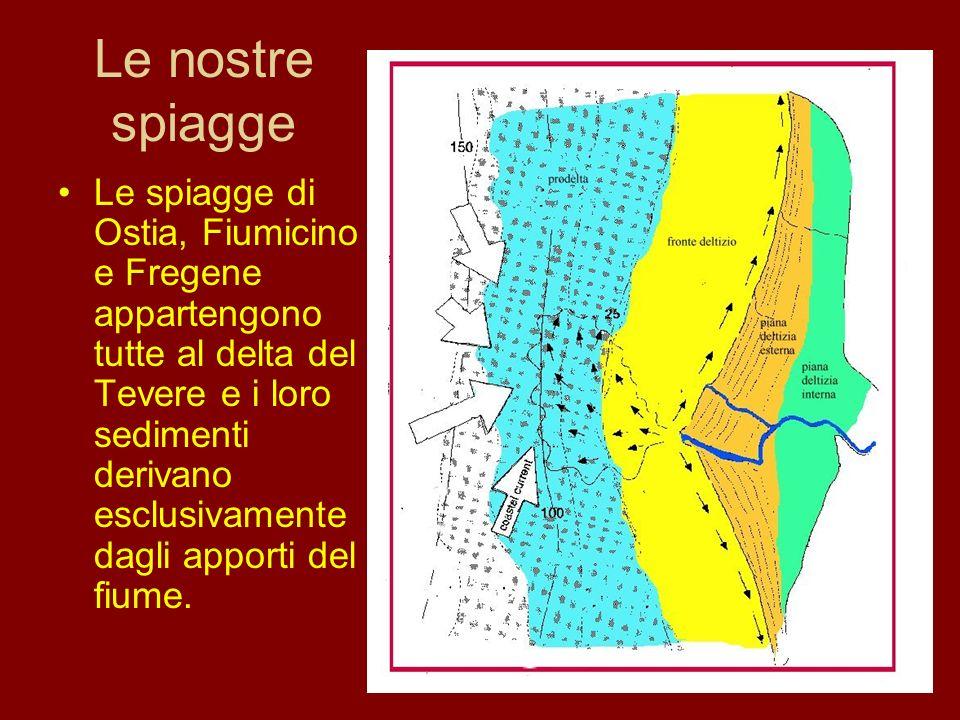 Le nostre spiagge Le spiagge di Ostia, Fiumicino e Fregene appartengono tutte al delta del Tevere e i loro sedimenti derivano esclusivamente dagli app