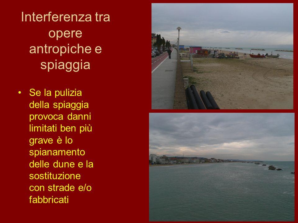 Interferenza tra opere antropiche e spiaggia Se la pulizia della spiaggia provoca danni limitati ben più grave è lo spianamento delle dune e la sostit