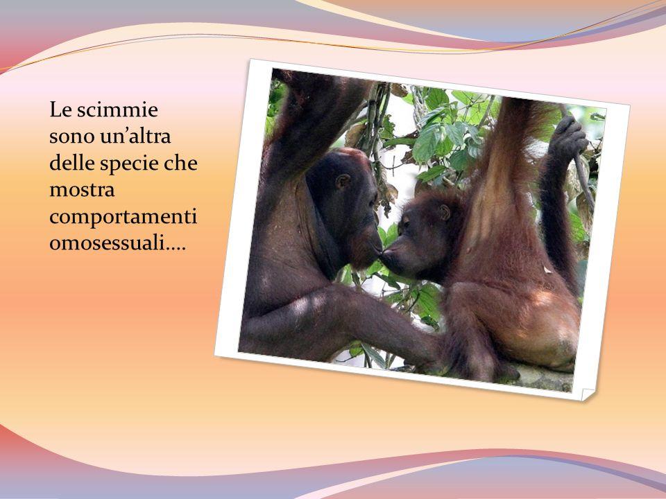 Perché se lo fanno le scimmie nessuno dice niente, ma se lo fanno loro si parla di contro natura e di scandalo ??