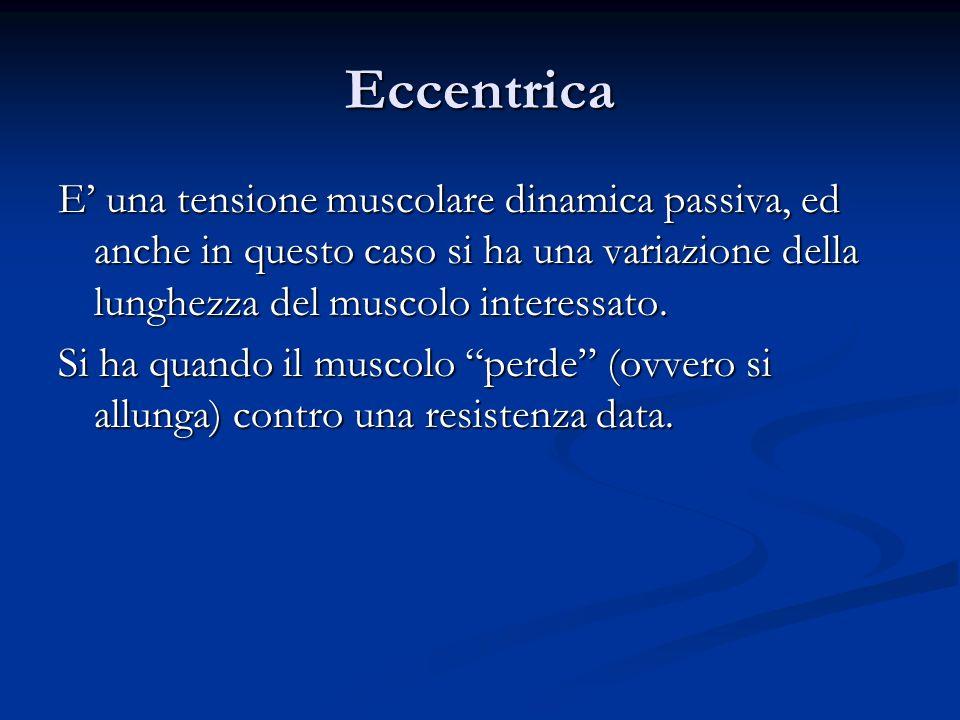 Eccentrica E una tensione muscolare dinamica passiva, ed anche in questo caso si ha una variazione della lunghezza del muscolo interessato. Si ha quan