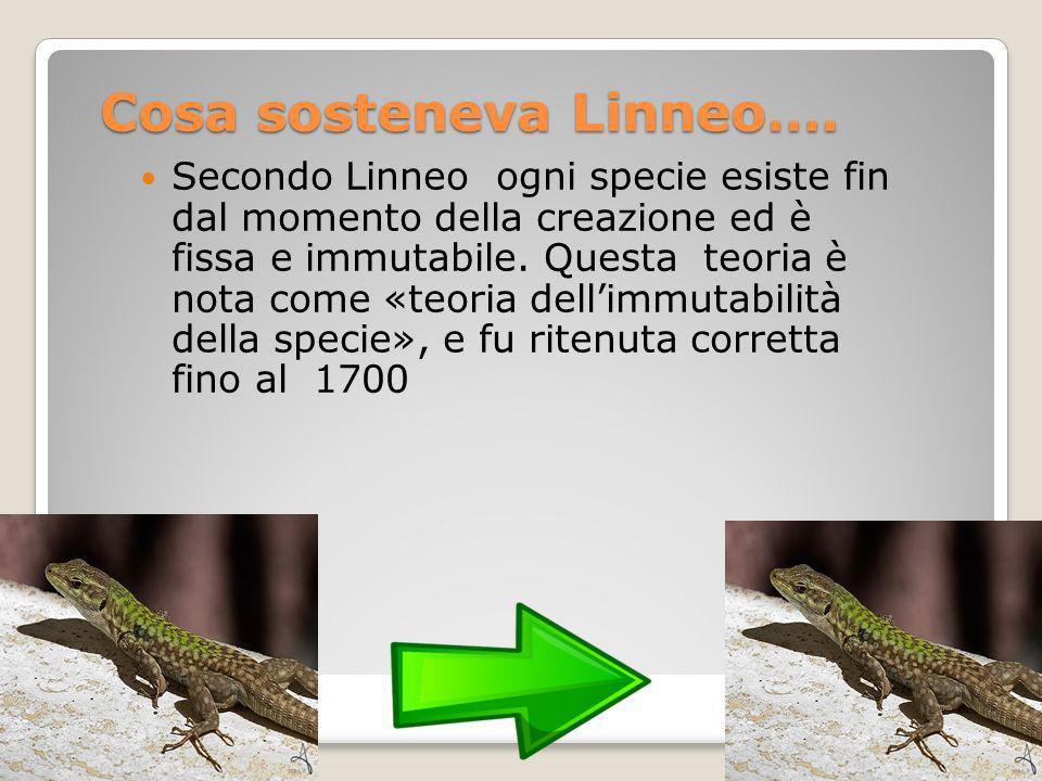 Cosa sosteneva Linneo…. Secondo Linneo ogni specie esiste fin dal momento della creazione ed è fissa e immutabile. Questa teoria è nota come «teoria d
