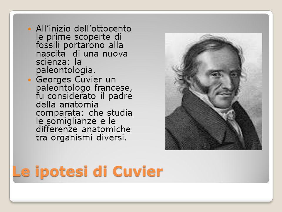 La teoria di Cuvier Secondo Cuvier sulla Terra si sono succeduti, nel corso del tempo, numerosi eventi catastrofici che hanno causato la scomparsa di numerose specie e la formazione dei fossili.