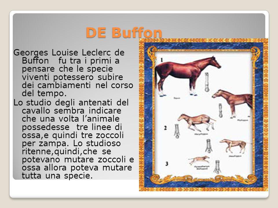 DE Buffon Georges Louise Leclerc de Buffon fu tra i primi a pensare che le specie viventi potessero subire dei cambiamenti nel corso del tempo. Lo stu