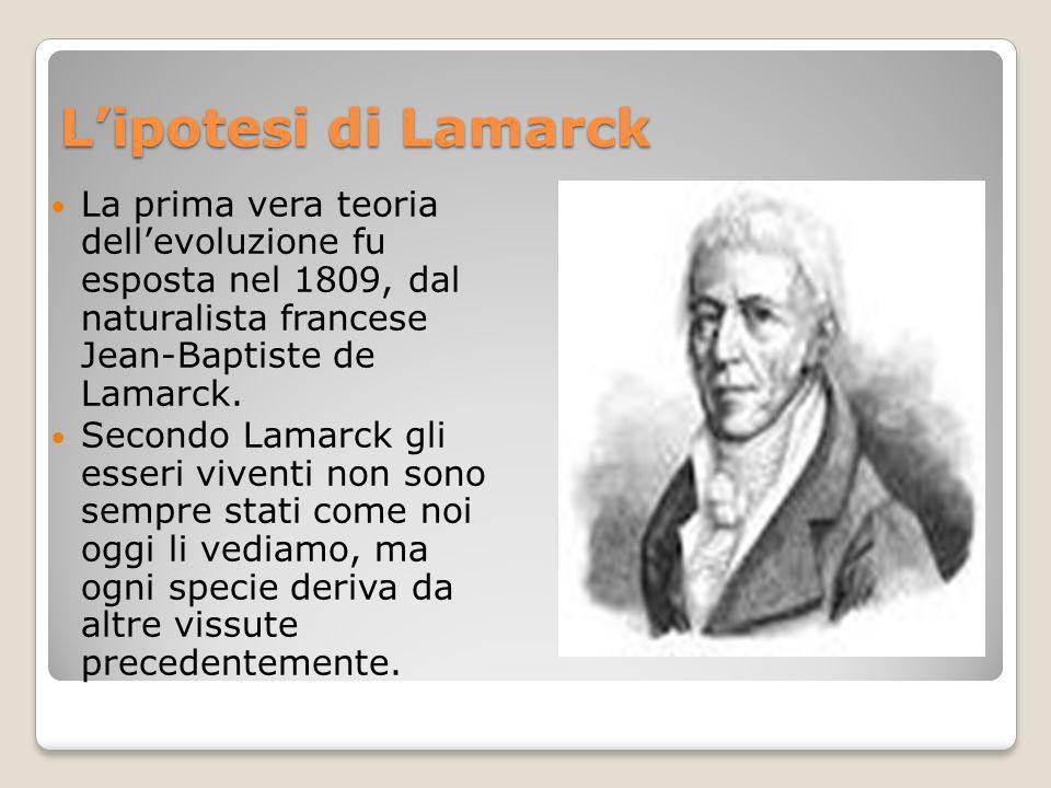 Lipotesi di Lamarck La prima vera teoria dellevoluzione fu esposta nel 1809, dal naturalista francese Jean-Baptiste de Lamarck. Secondo Lamarck gli es