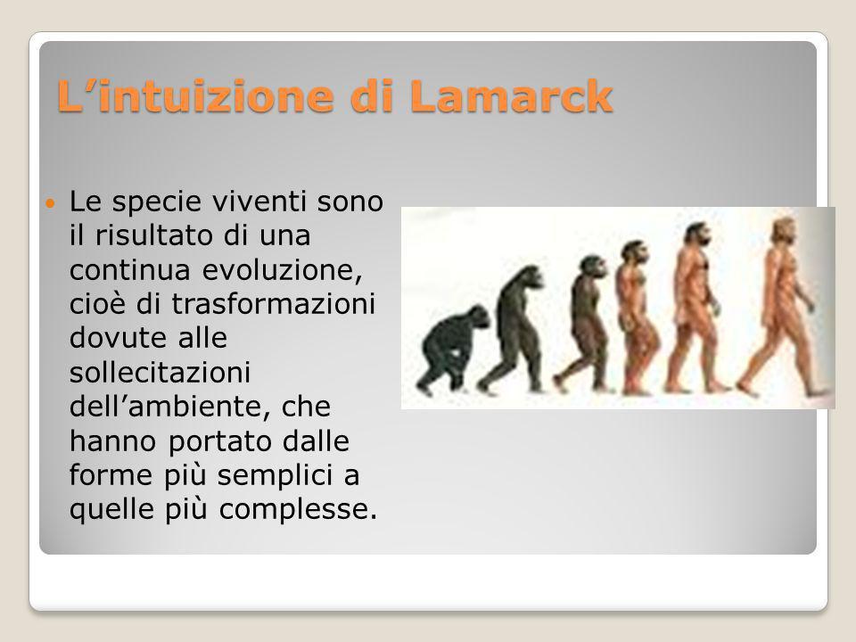 Lintuizione di Lamarck Le specie viventi sono il risultato di una continua evoluzione, cioè di trasformazioni dovute alle sollecitazioni dellambiente,