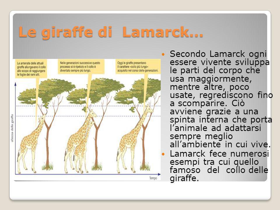 Secondo Lamarck le giraffe, durante la loro vita, si «sforzarono» di allungare il collo per arrivare a mangiare le foglie più alte e tenere degli alberi.