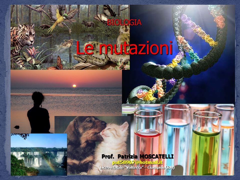 Prof. Patrizia MOSCATELLI pat58907@hotmail.it Liceo statale Volterra – Ciampino(RM)