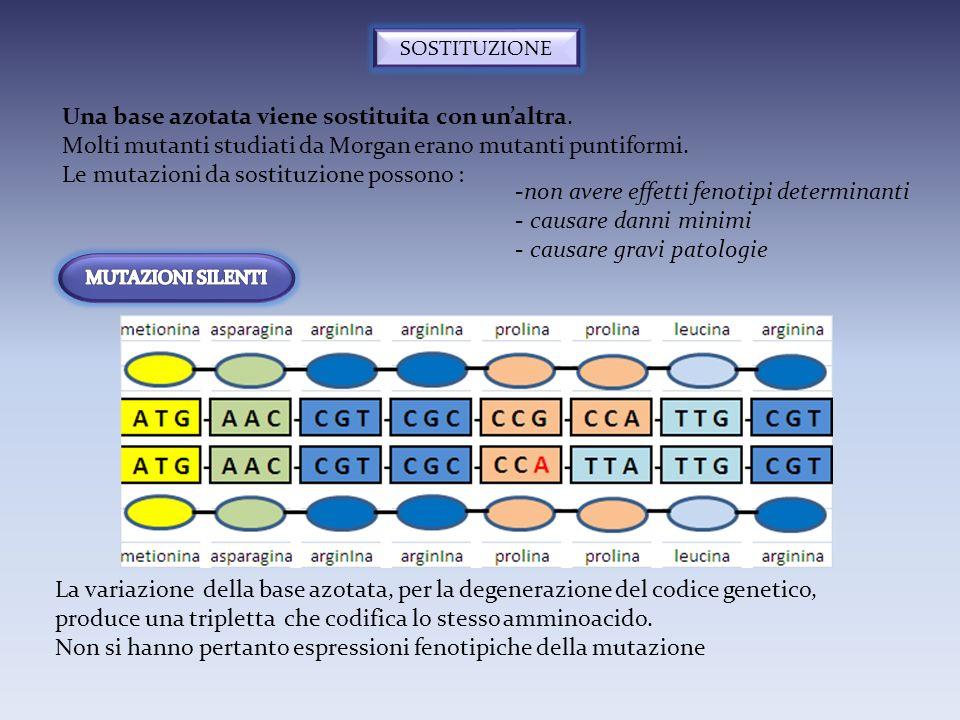 SOSTITUZIONE Una base azotata viene sostituita con unaltra. Molti mutanti studiati da Morgan erano mutanti puntiformi. Le mutazioni da sostituzione po