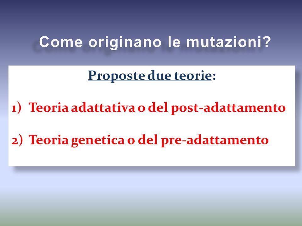 Proposte due teorie: 1)Teoria adattativa o del post-adattamento 2)Teoria genetica o del pre-adattamento Proposte due teorie: 1)Teoria adattativa o del