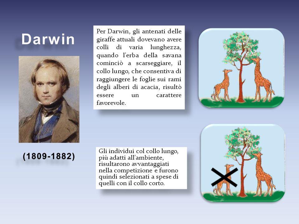 Per Darwin, gli antenati delle giraffe attuali dovevano avere colli di varia lunghezza, quando l'erba della savana cominciò a scarseggiare, il collo l