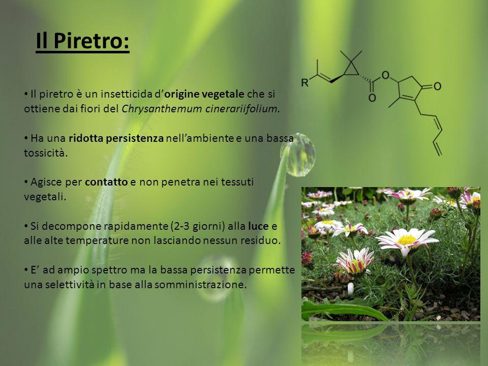 Il Piretro: Il piretro è un insetticida dorigine vegetale che si ottiene dai fiori del Chrysanthemum cinerariifolium.
