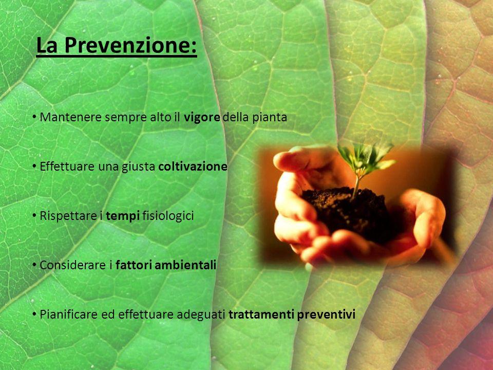 La Prevenzione: Mantenere sempre alto il vigore della pianta Effettuare una giusta coltivazione Rispettare i tempi fisiologici Considerare i fattori ambientali Pianificare ed effettuare adeguati trattamenti preventivi