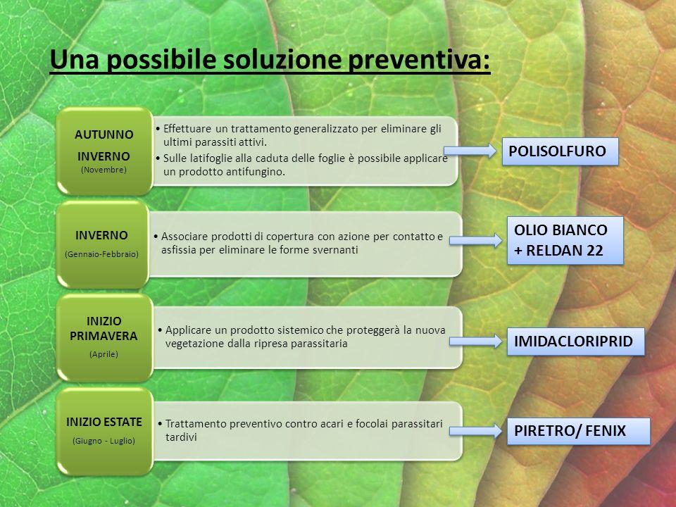 Una possibile soluzione preventiva: Effettuare un trattamento generalizzato per eliminare gli ultimi parassiti attivi.