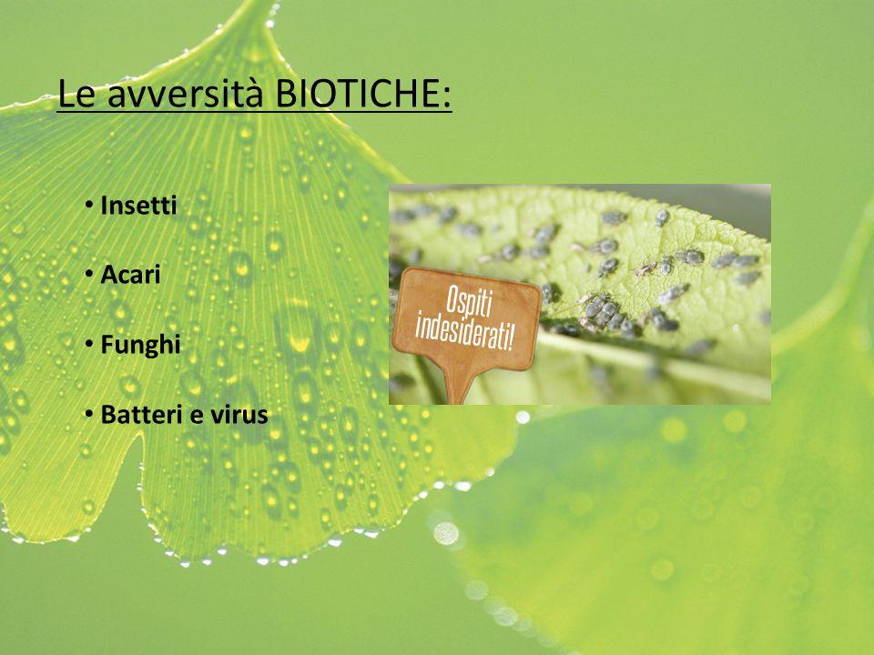 Le avversità BIOTICHE: Insetti Acari Funghi Batteri e virus